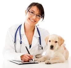 puppy health