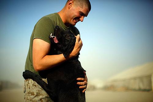labrador hug