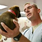 Veterinary Information for dogs