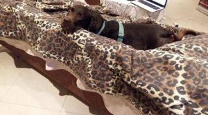 Choko resting