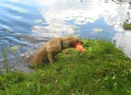 retrieving exercise for labs